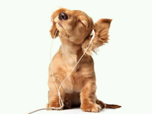hear-dog