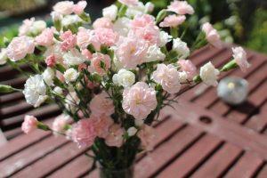 carnation-2442405_960_720